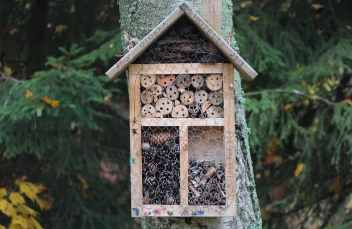 Swiss-Alps-Chalet-outdoor-activities-build-bug-hotel
